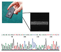 Microarray analysis for rapid resequencing of blood coagulation factor genes, click for vector image enlargement (PDF)